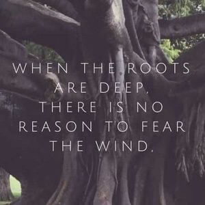 When the roots are deep, there is no reason to fear the wind. #Family #Quotes